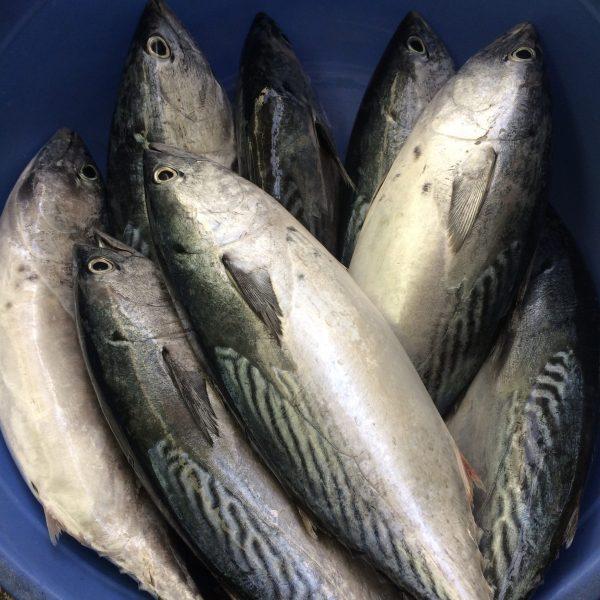cá Ngừ bông 1kg   Quà Quê